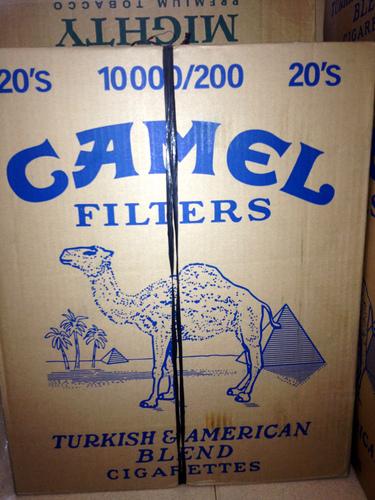 camel stock2.jpg